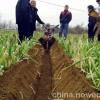 培土机培土机视频培土机图片培土机多少钱一台培土机刀片